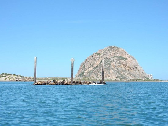 Morro Bay, Kaliforniya: Sea Lions!