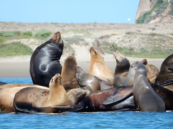 Morro Bay, Kaliforniya: Sea Lions up close (zoomed, I was that close)