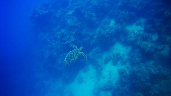 Mai Dive - Astrolabe Reef Resort Picture