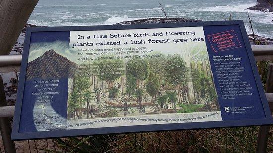 Waikawa, New Zealand: histoire forêt