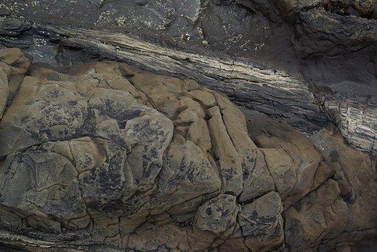 Waikawa, Nouvelle-Zélande : tronc pétrifié