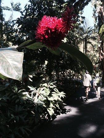 Papaikou, Χαβάη: photo0.jpg