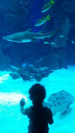 fakhi aquarium - Picture of Fakieh Aquarium, Jeddah - TripAdvisor