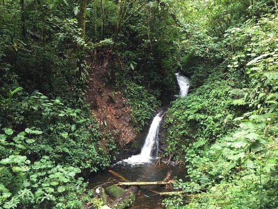 Réserve de Monteverde Photo