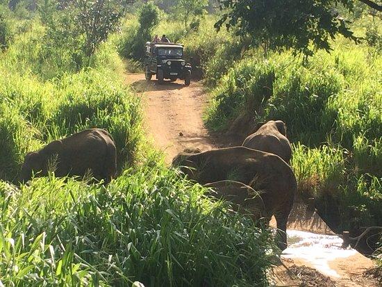 Habarana, Sri Lanka: elephants in the river crossing