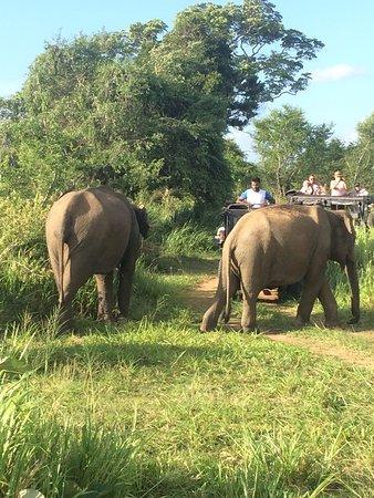Habarana, Sri Lanka: elepahnt family