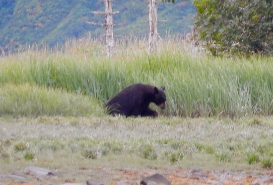 Kenai Fjords National Park, Αλάσκα: photo8.jpg