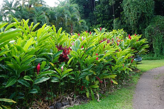 Wailuku, Hawaje: Gorgeous flower farm grounds during Road to Hana tour