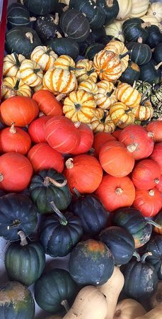 Mexico, NY: Nothing says fall like Behling's Orchards