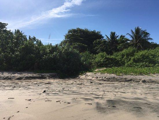 Nosara Beach (Playa Guiones): photo3.jpg