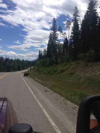Goleen, Canadá: Little bear passing through near the camp ground