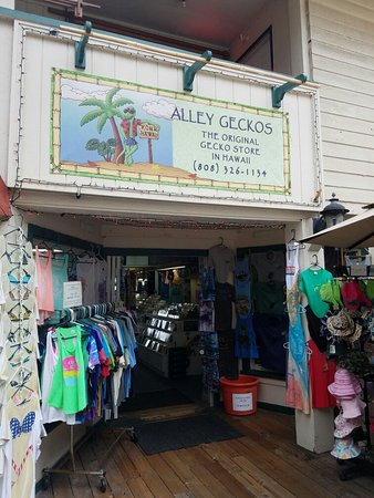Alley Geckos