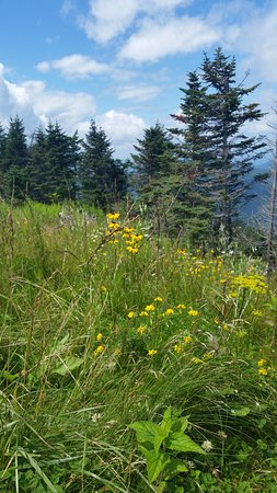 Arlington, VT: Wild mountain flowers.
