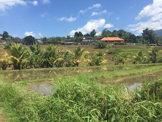 Jatiluwih Green Land: photo4.jpg