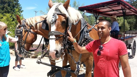 The Wine Carriage: The horses are so gentle!