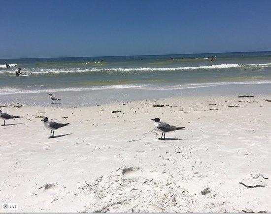 Honeymoon Island State Park: Seagulls on the beach