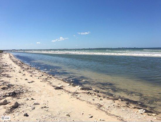 Honeymoon Island State Park: Water on the beach
