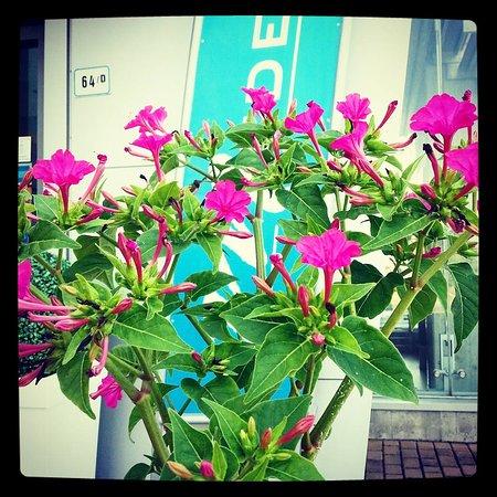 Medea Hotel: Ingresso con fiori