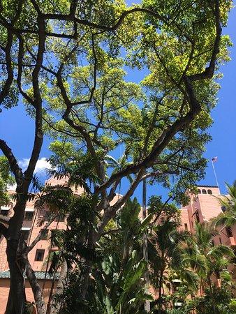 The Royal Hawaiian, a Luxury Collection Resort: ロイヤル ハワイアン ホテル