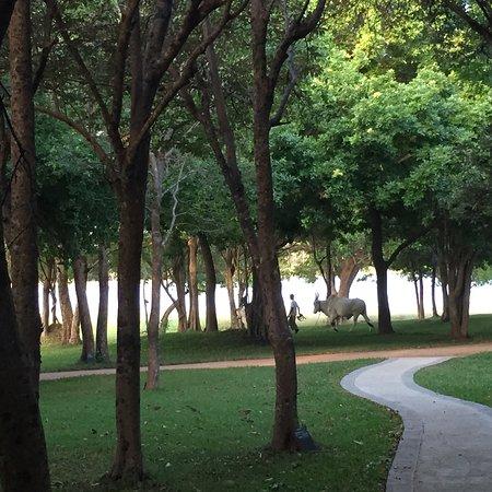 Amaya Lake: photo3.jpg