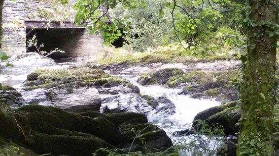 Durrus, Ирландия: Kilravock Garden