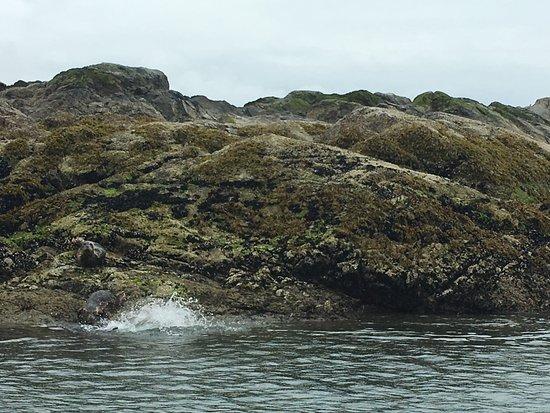 West Vancouver, Canadá: Seals!