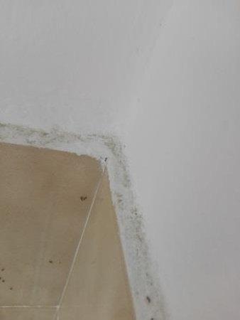 camera condivisa con formiche