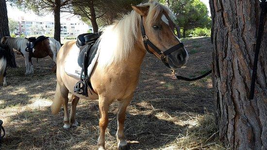 L'Ile aux poneys