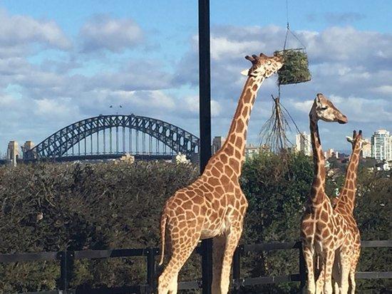 Mosman, أستراليا: photo0.jpg