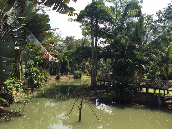 Sepilok Jungle Resort: View from the restaurant