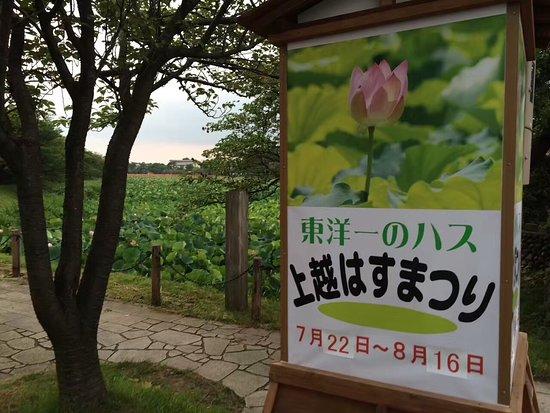 Takada Park: 東洋で随一の蓮の風景