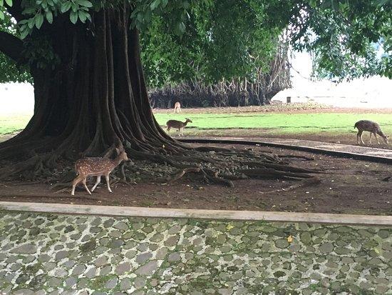 Bogor Palace: photo0.jpg