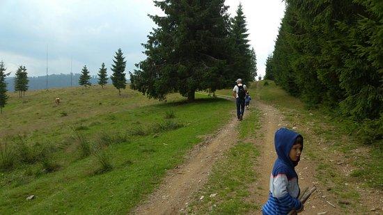 Belis, Rumania: Очень красивое место для отдыха с детьми. Рядом лес и река.מקום מדהים לשהיות בו שבוע בקיץ. לישרא