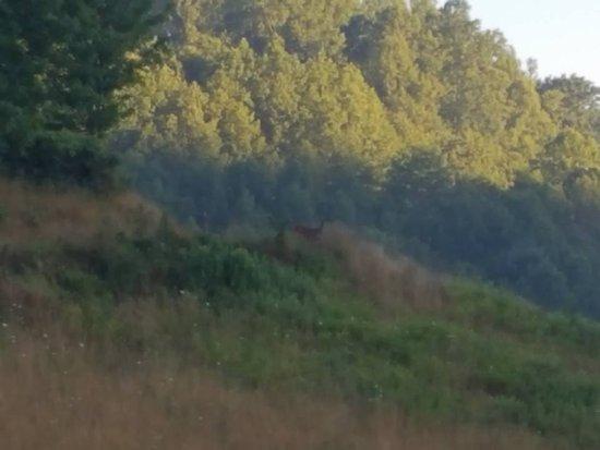 Burnsville, Kuzey Carolina: Deer in the distance