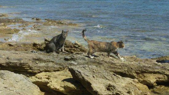 I Gatti di Su Pallosu