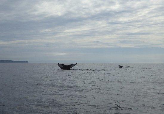 Trinity, Kanada: Double whale tail
