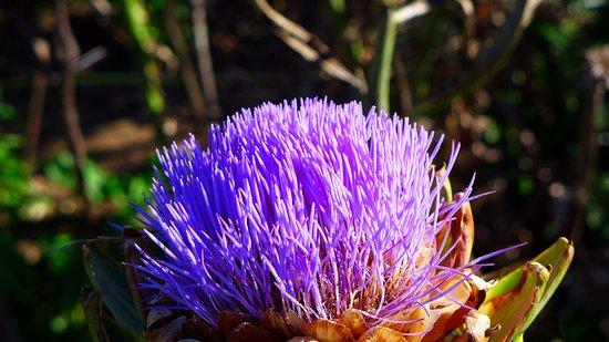 Cascada A Seimeira de Vilagocende: Flores de la zona