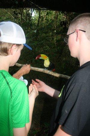 The Belize Zoo: VIP tour - feeding a Toucan