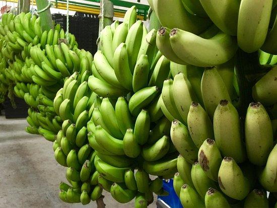Port Edward, جنوب أفريقيا: Mac Banana