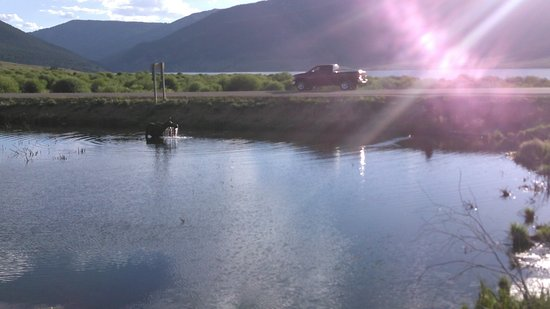 Gunnison, Colorado: Daily appearance by a moose at the fishing pond near Taylor Reservoir
