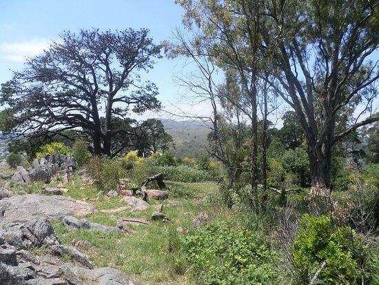 Tandil, Argentina: Su vegetación