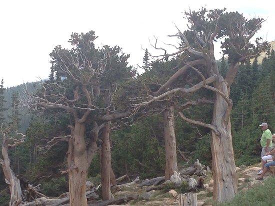 Evergreen, CO: photo5.jpg