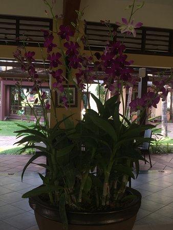 Terracotta Resort: Хороший отель, жили в вилле с видом на море... Все понравилось... Сервис достойный... Отличная к