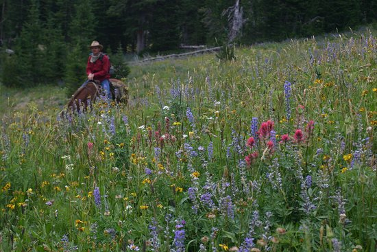 Skyline Guest Ranch and Guide Service: Horseback riding through mountain wildflowers