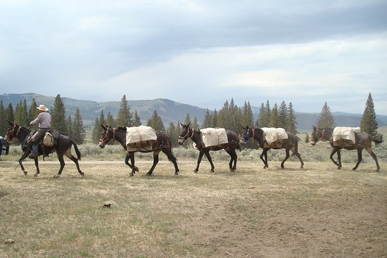 Skyline Guest Ranch and Guide Service: Packing into the wilderness backcountry.