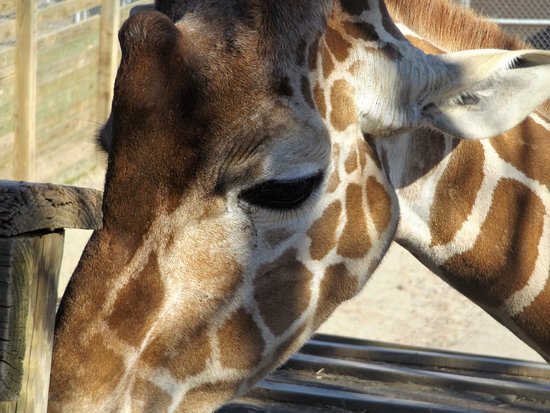 Metro Richmond Zoo: You can get up close and feed a giraffe.