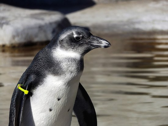 Metro Richmond Zoo: You don't want to miss the penguin exhibit.