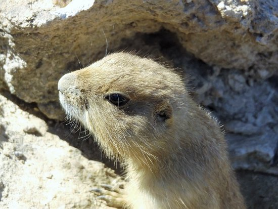 Metro Richmond Zoo: Watching the prairie dogs is a delightful way to pass the time.