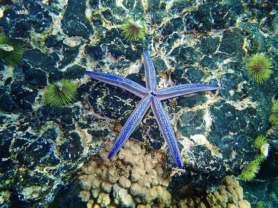 Puerto Villamil, Ekvador: Urchins and a Starfish