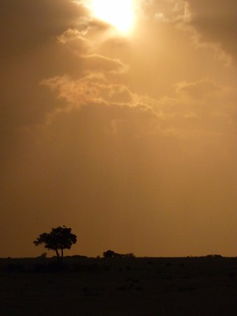 F. King Tours and Safaris - Day Tours: Sunset over the Mara
